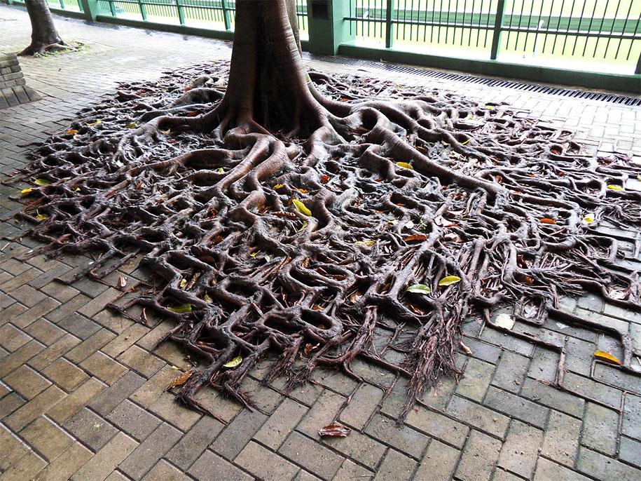 beautiful=tree-root-patterns-concrete-1