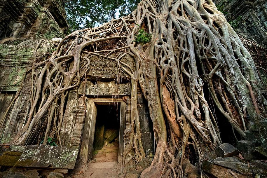 beautiful=tree-root-patterns-concrete-11