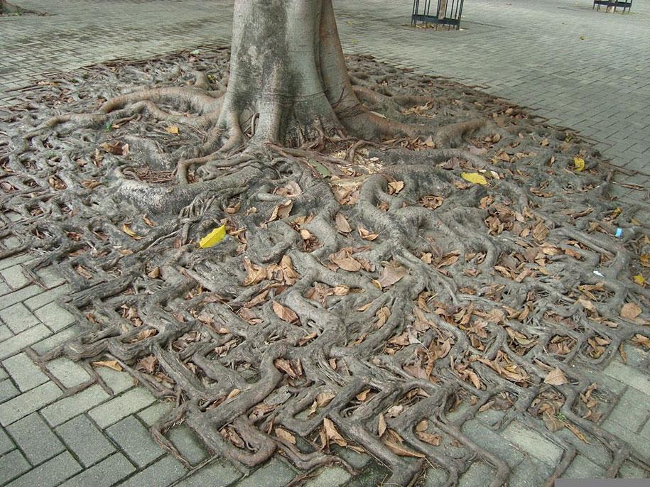 beautiful=tree-root-patterns-concrete-12