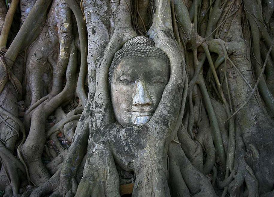 beautiful=tree-root-patterns-concrete-18