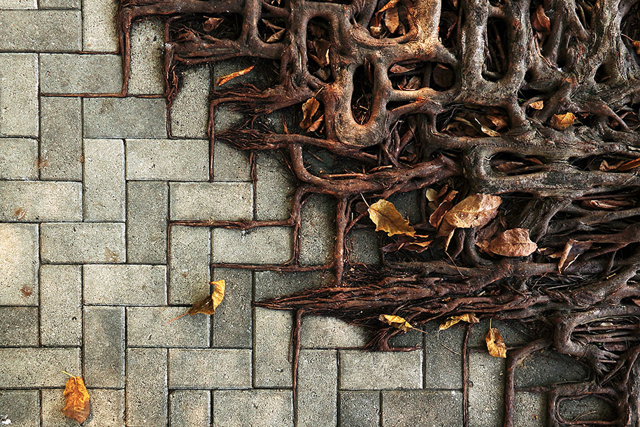 beautiful=tree-root-patterns-concrete-2