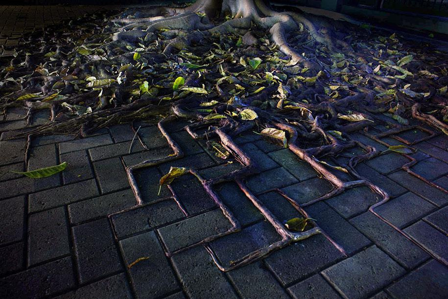 beautiful=tree-root-patterns-concrete-20