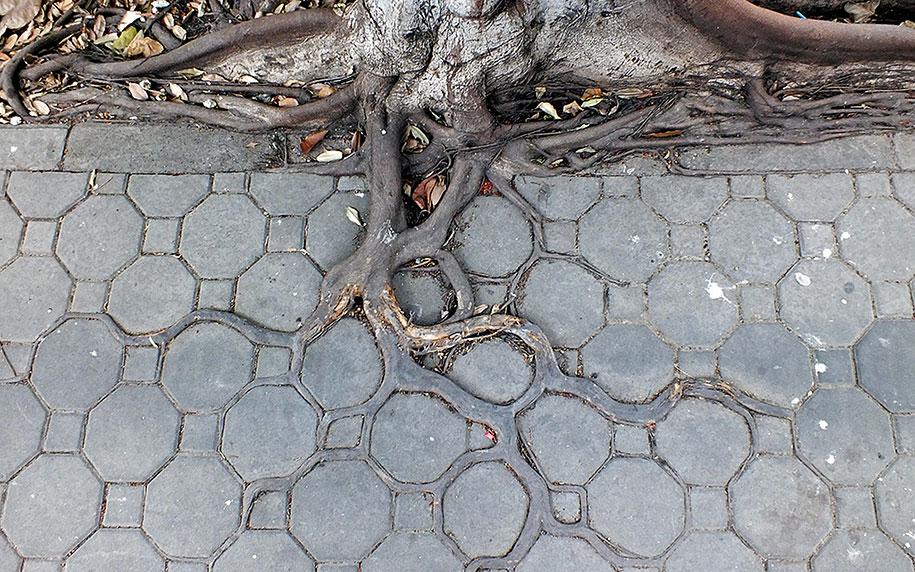 beautiful=tree-root-patterns-concrete-4