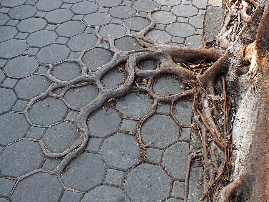 beautiful=tree-root-patterns-concrete-5