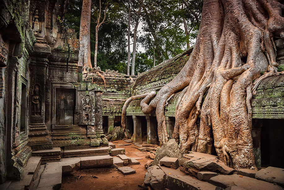beautiful=tree-root-patterns-concrete-9