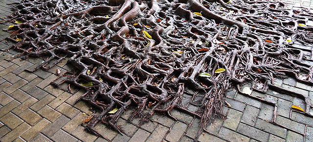 Tree Roots Reclaiming Their Space From Concrete Demilked
