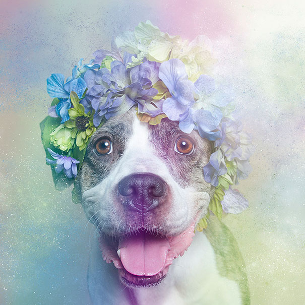 flower-power-pit-bulls-of-the-revolution-photography-sophie-gamand-5