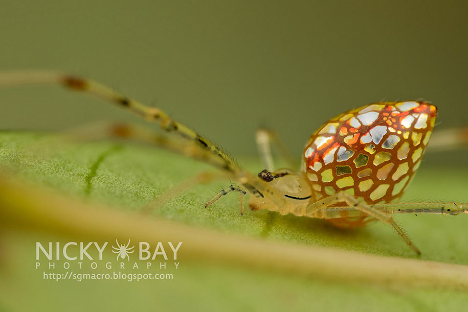 mirror-spider-animal-macro-photography-5