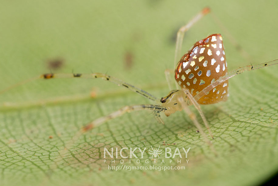 mirror-spider-animal-macro-photography-6