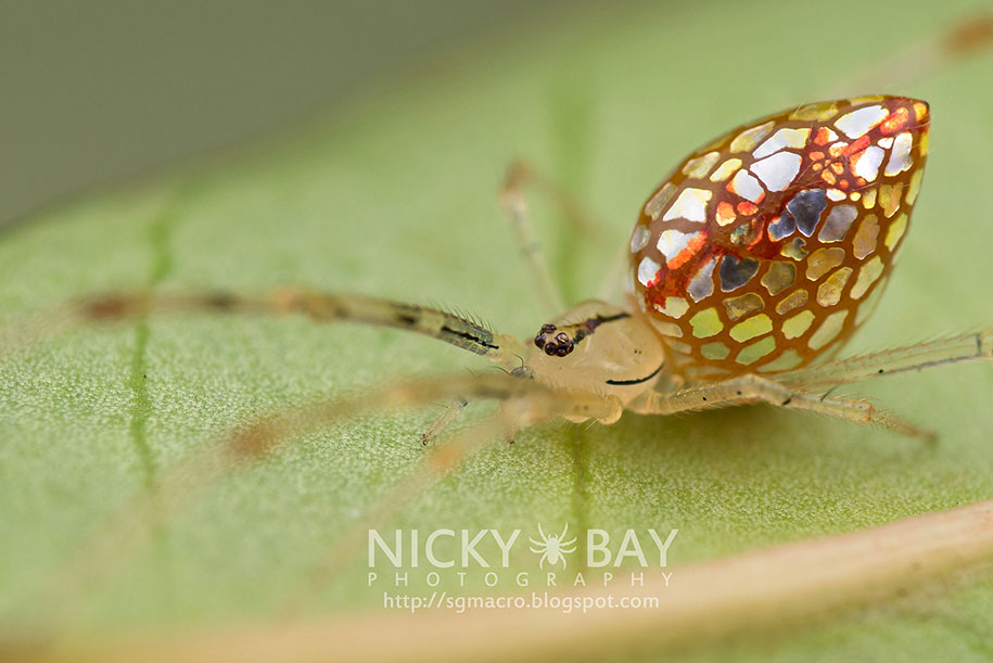 mirror-spider-animal-macro-photography-9