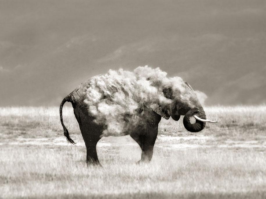 wildlife-animal-photography-marina-cano-1