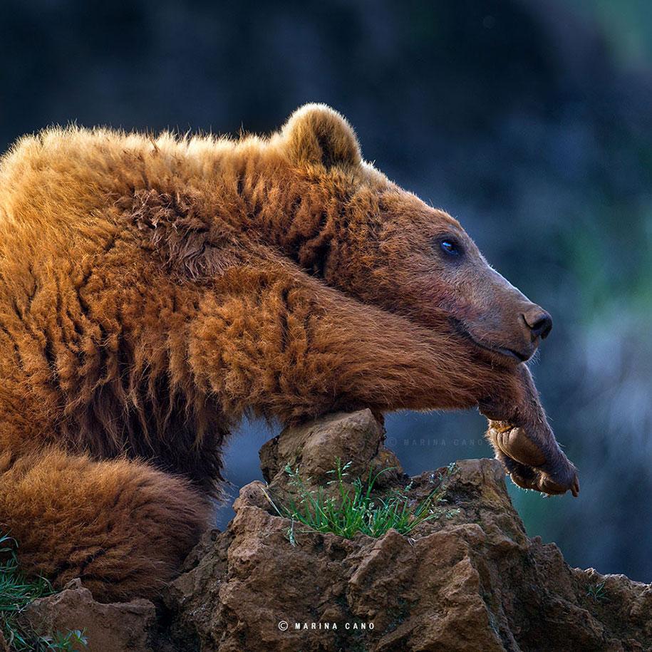 wildlife-animal-photography-marina-cano-18