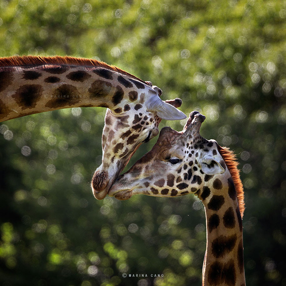 Stunning Photographs Of Wild Animals By Marina Cano