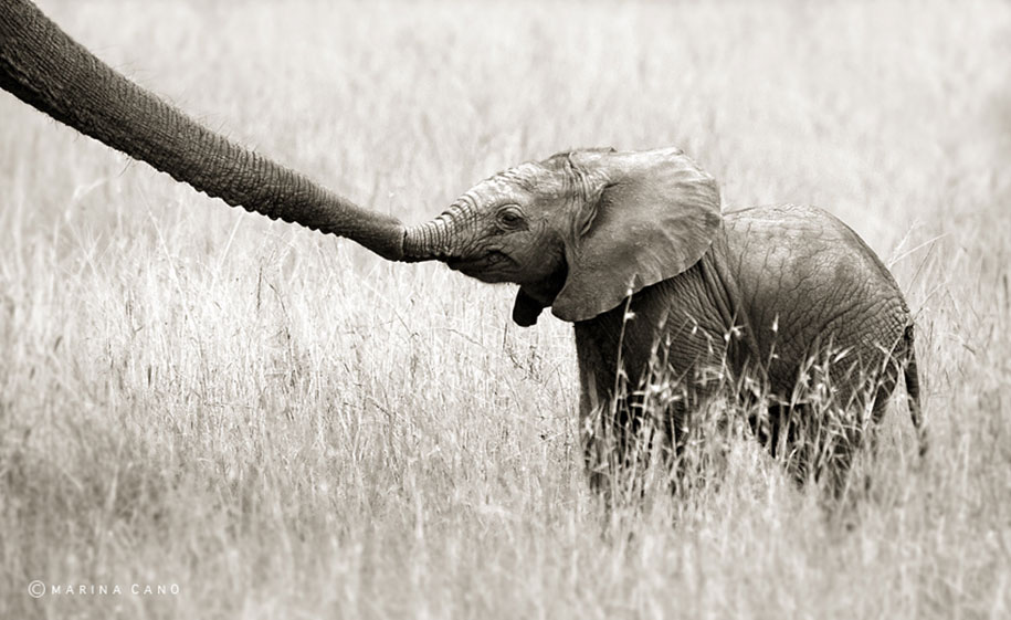 wildlife-animal-photography-marina-cano-23