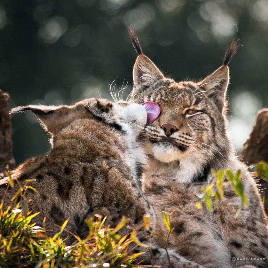 wildlife-animal-photography-marina-cano-4