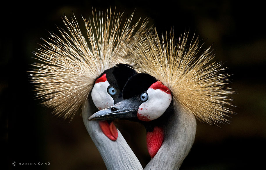 wildlife-animal-photography-marina-cano-6