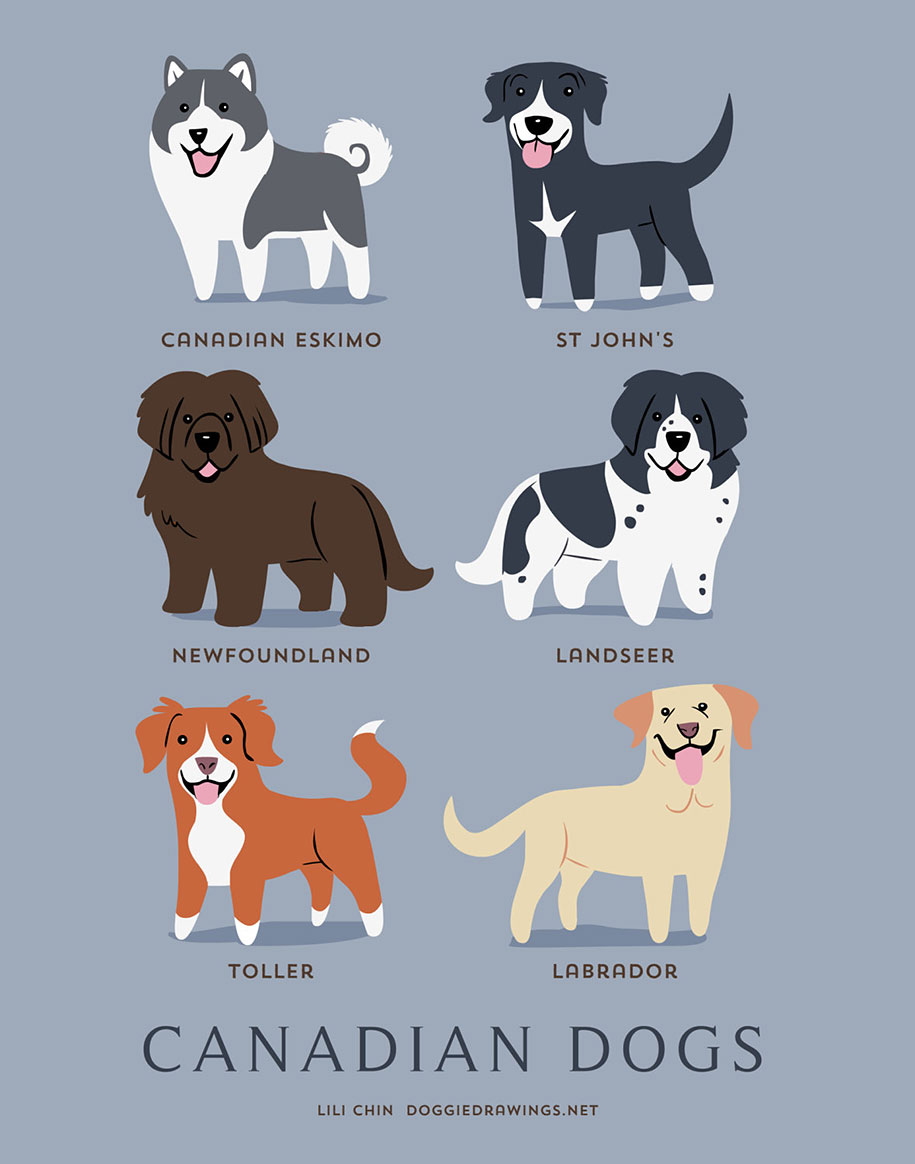 dogs-of-the-world-breeds-posters-lili-chin-1