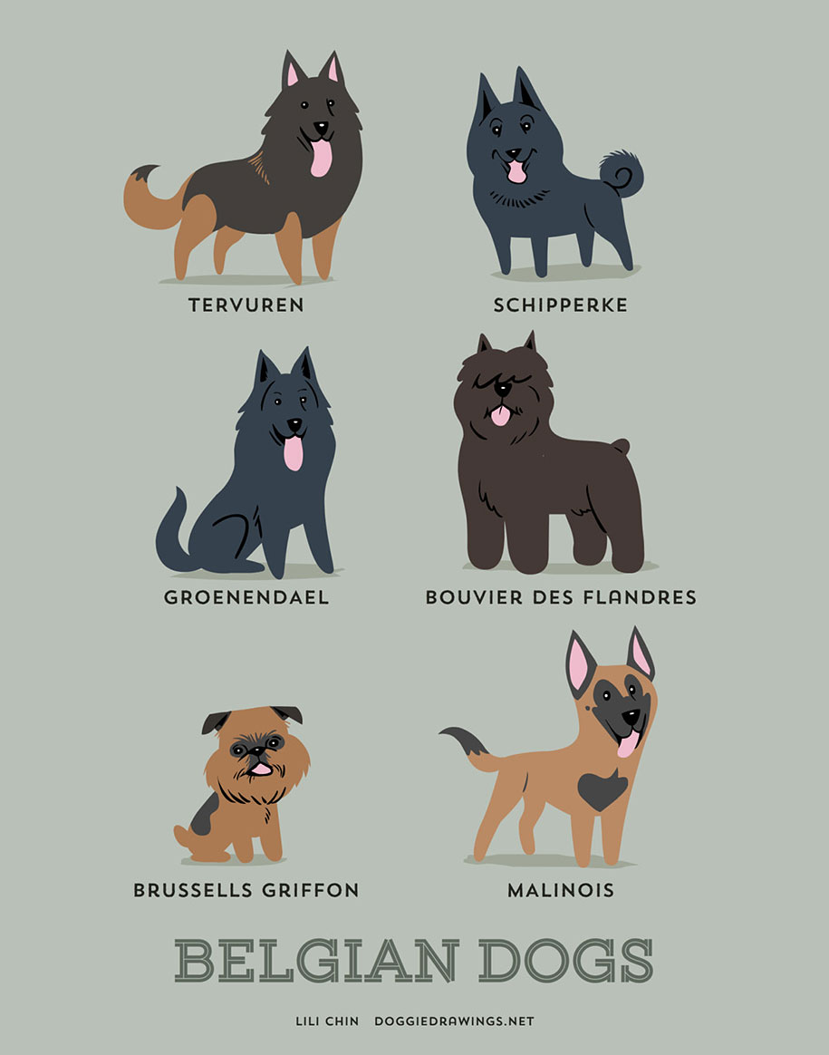 dogs-of-the-world-breeds-posters-lili-chin-10