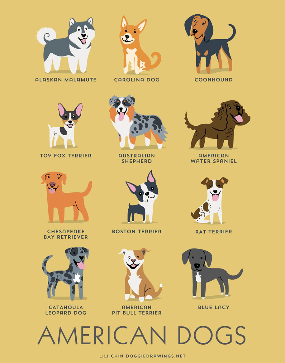 dogs-of-the-world-breeds-posters-lili-chin-13
