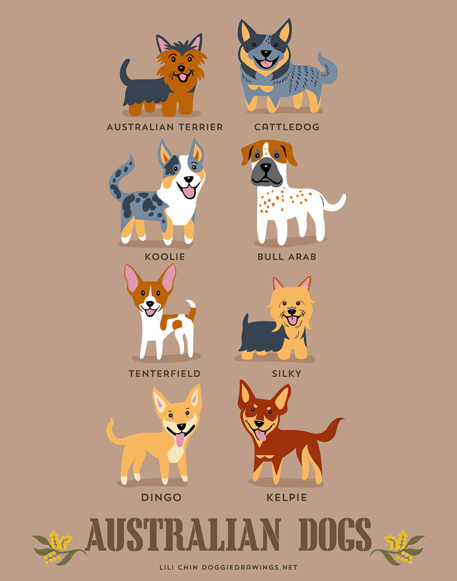 dogs-of-the-world-breeds-posters-lili-chin-2