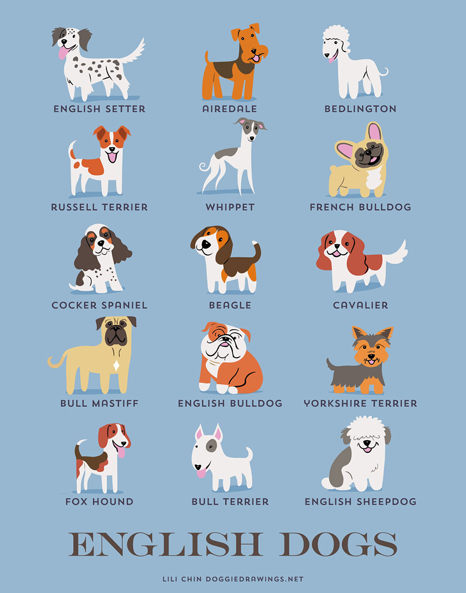dogs-of-the-world-breeds-posters-lili-chin-8