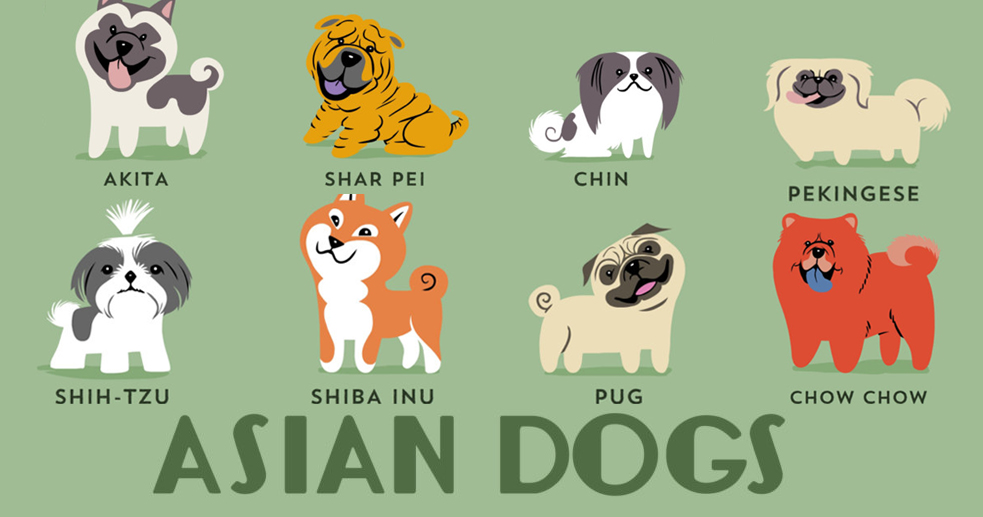 The Origins Of 200 Dog Breeds Explained In Adorable Posters