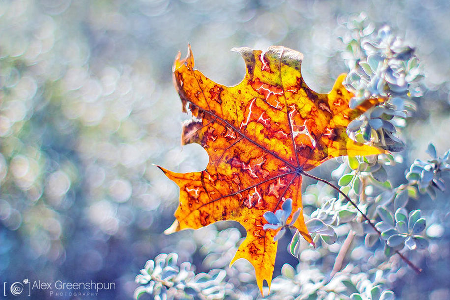 fall-nature-photography-autumn-colors-alex-greenshpun-14