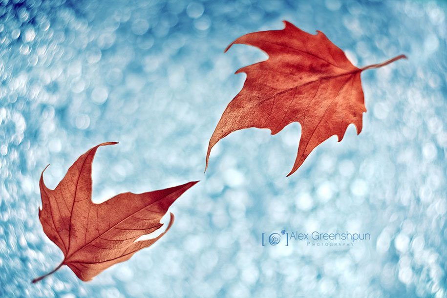 fall-nature-photography-autumn-colors-alex-greenshpun-17