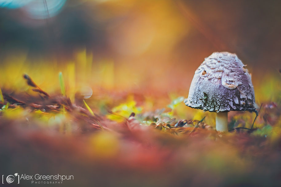 fall-nature-photography-autumn-colors-alex-greenshpun-2
