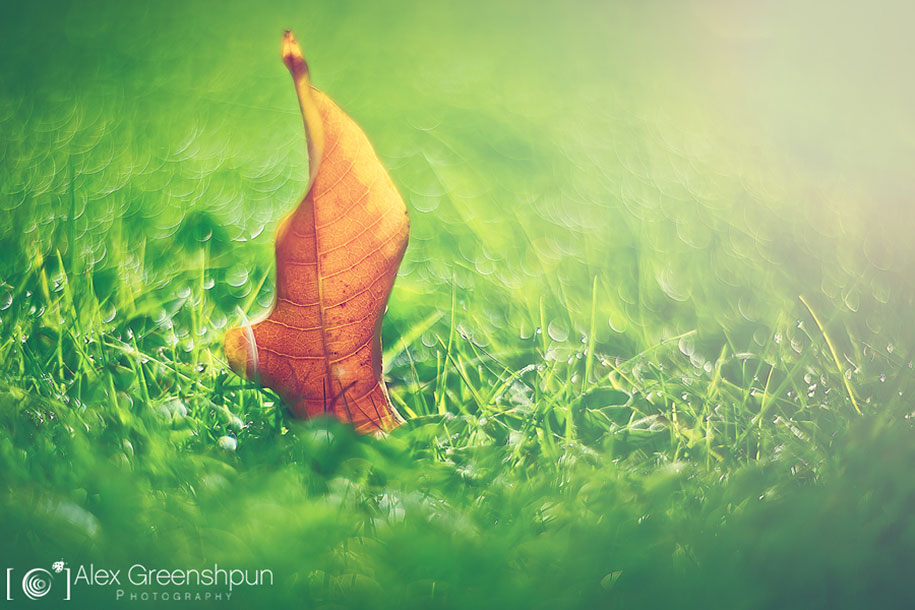 fall-nature-photography-autumn-colors-alex-greenshpun-20