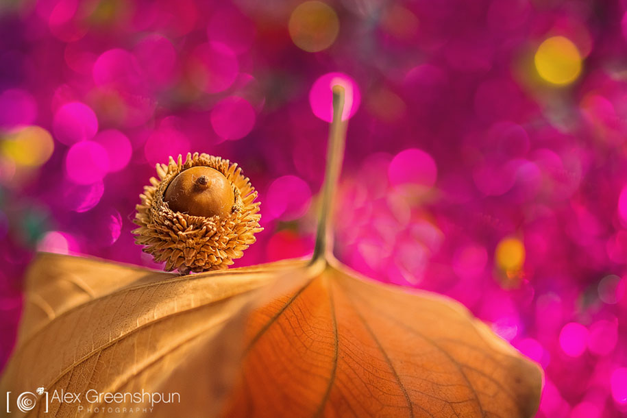 fall-nature-photography-autumn-colors-alex-greenshpun-22