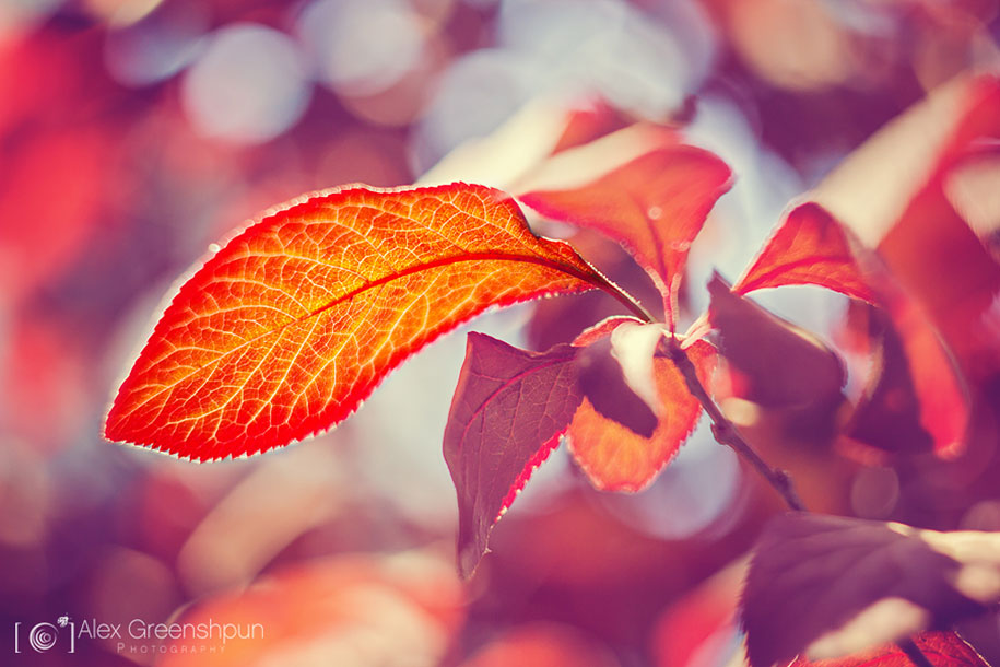 fall-nature-photography-autumn-colors-alex-greenshpun-24