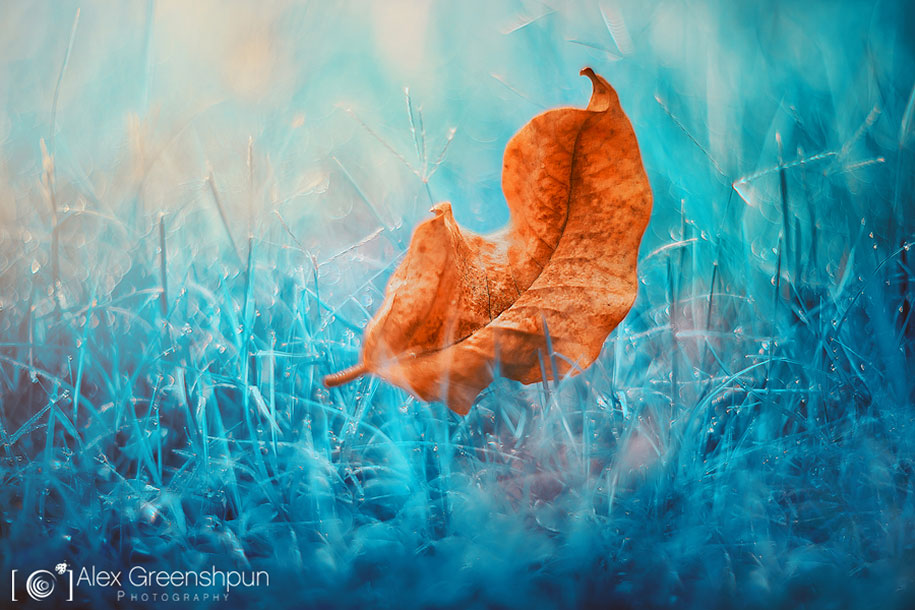 fall-nature-photography-autumn-colors-alex-greenshpun-25