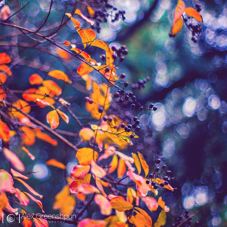 fall-nature-photography-autumn-colors-alex-greenshpun-5