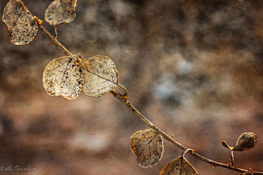 fall-nature-photography-autumn-colors-alex-greenshpun-9