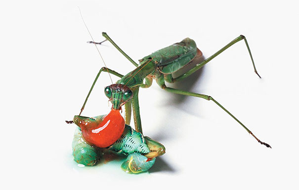 food-chain-insect-photography-catherine-chalmers-6