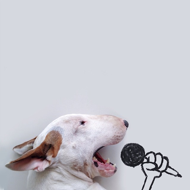 jimmy-choo-bull-terrier-interactive-illustrations-rafael-mantesso-1