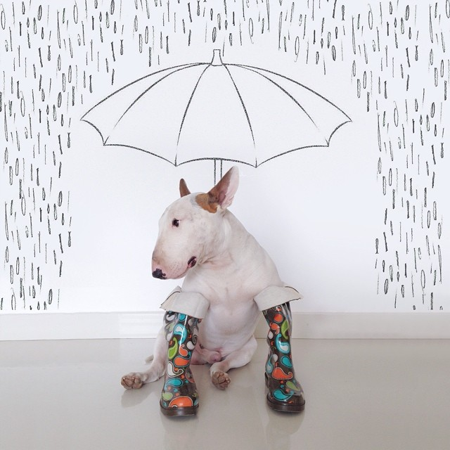 jimmy-choo-bull-terrier-interactive-illustrations-rafael-mantesso-10