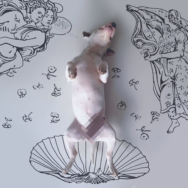 jimmy-choo-bull-terrier-interactive-illustrations-rafael-mantesso-12