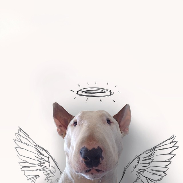 jimmy-choo-bull-terrier-interactive-illustrations-rafael-mantesso-7