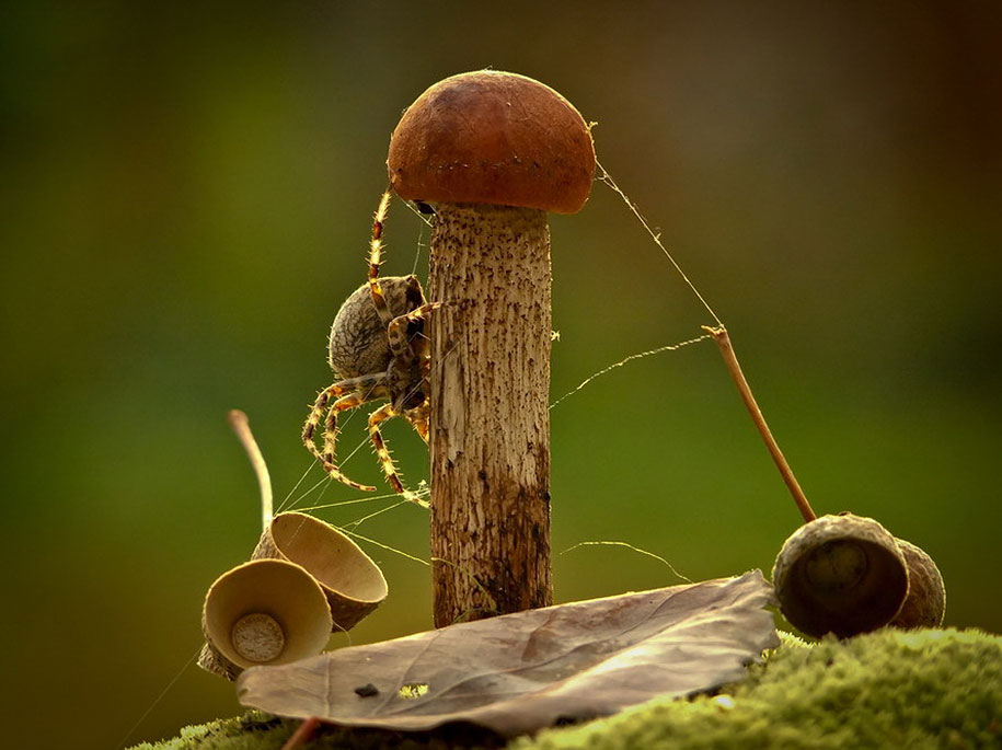 mushroom-nature-macro-photography-vyacheslav-mishchenko-10
