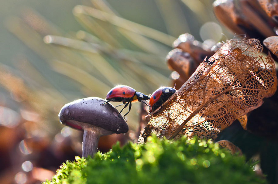 mushroom-nature-macro-photography-vyacheslav-mishchenko-11