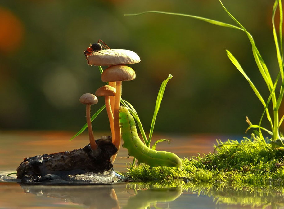 mushroom-nature-macro-photography-vyacheslav-mishchenko-13