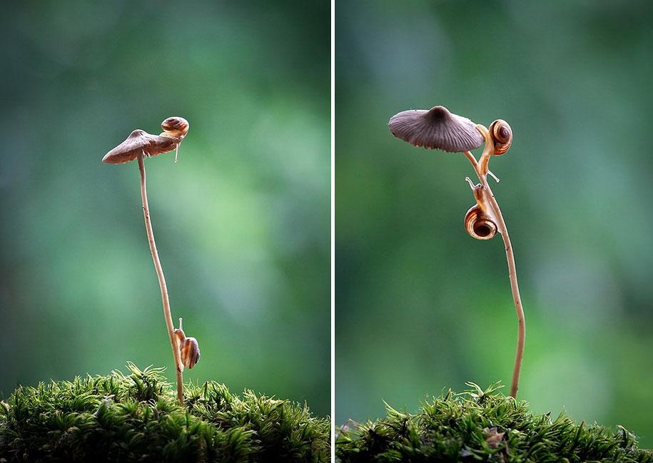 mushroom-nature-macro-photography-vyacheslav-mishchenko-14
