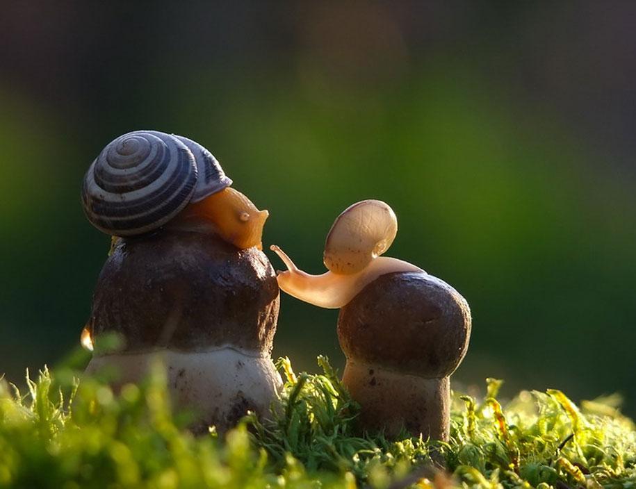 mushroom-nature-macro-photography-vyacheslav-mishchenko-15