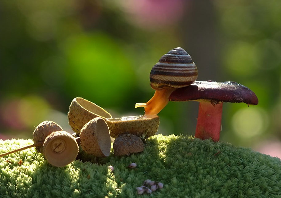 mushroom-nature-macro-photography-vyacheslav-mishchenko-17