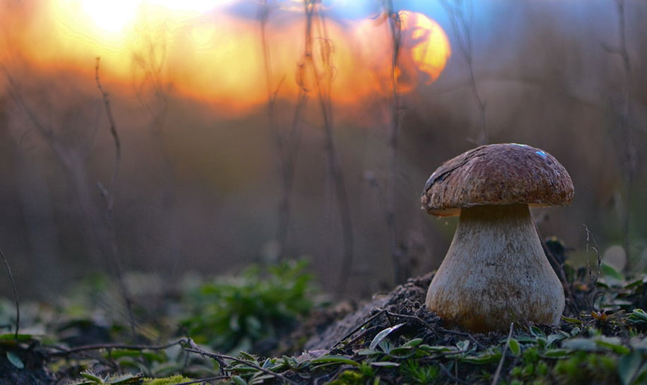 mushroom-nature-macro-photography-vyacheslav-mishchenko-18