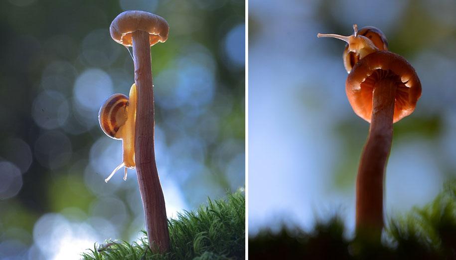 mushroom-nature-macro-photography-vyacheslav-mishchenko-19