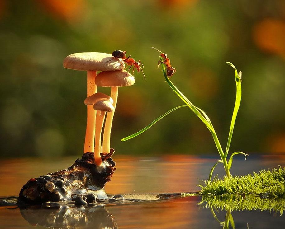 mushroom-nature-macro-photography-vyacheslav-mishchenko-20