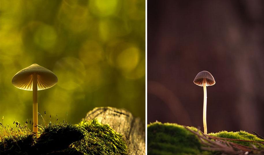mushroom-nature-macro-photography-vyacheslav-mishchenko-21